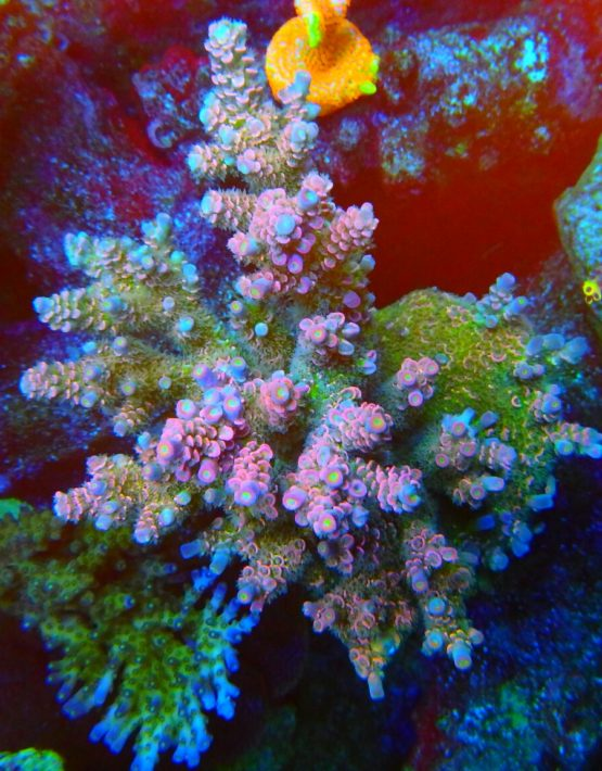 Rainbow Starlite