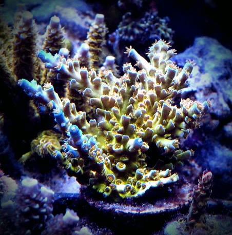 sexy-corals-op