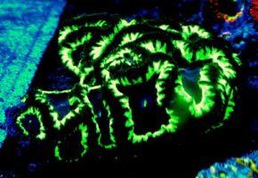 green-lantern-blastos