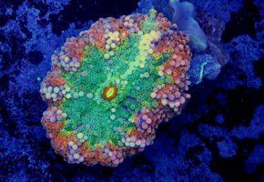 yuma-rainbow-mushroom